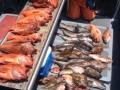 Morro bay fishing charters